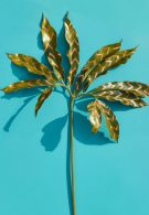 wonderplants 12 thumbnail