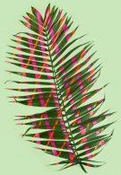 wonderplants 4 thumbnail