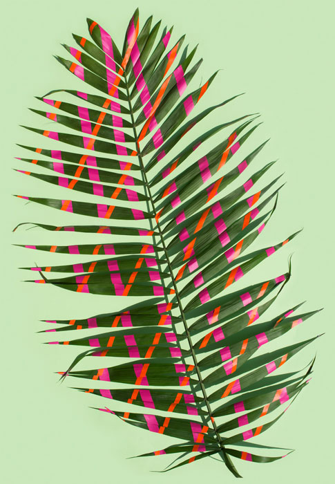 wonderplants 4 image