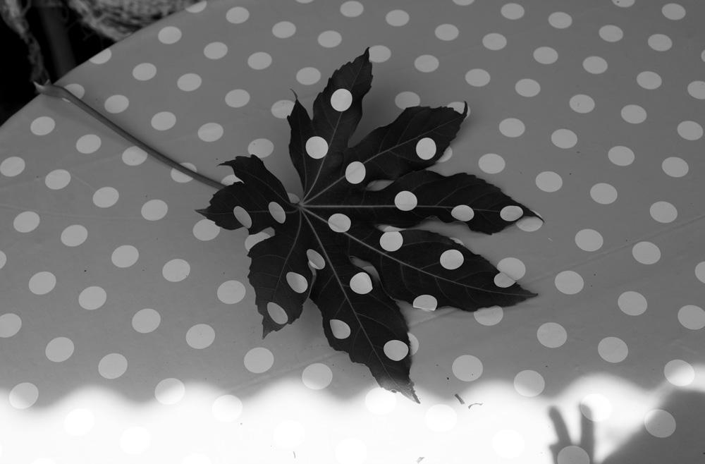 polka leaf image