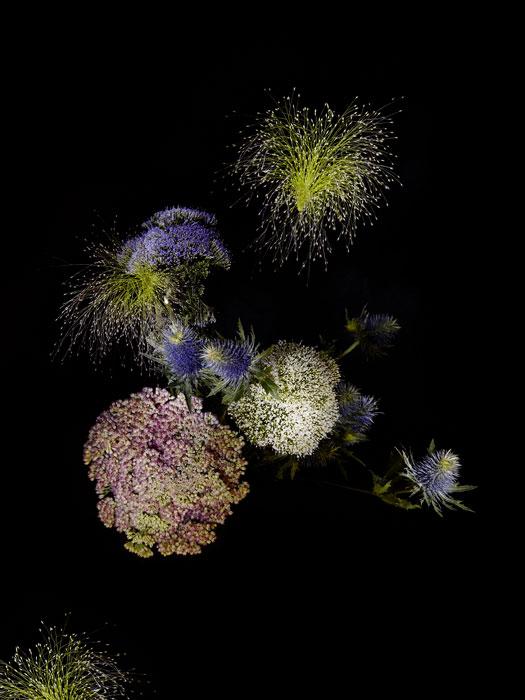 flowerworks 2 image
