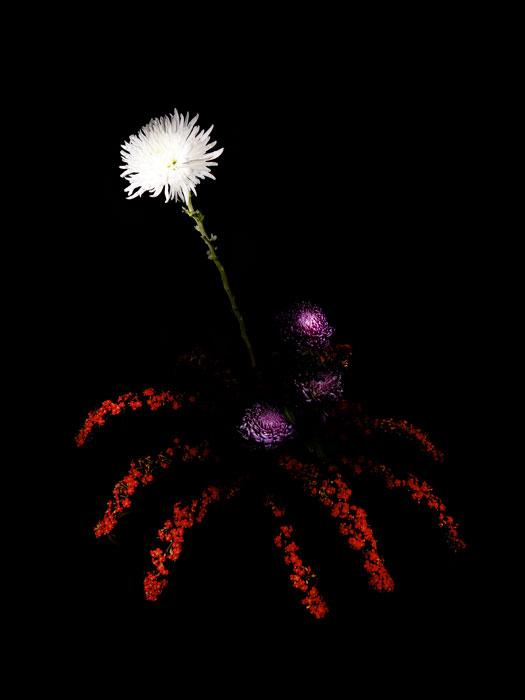 flowerworks 1 image