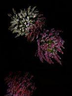 flowerworks 6 thumbnail