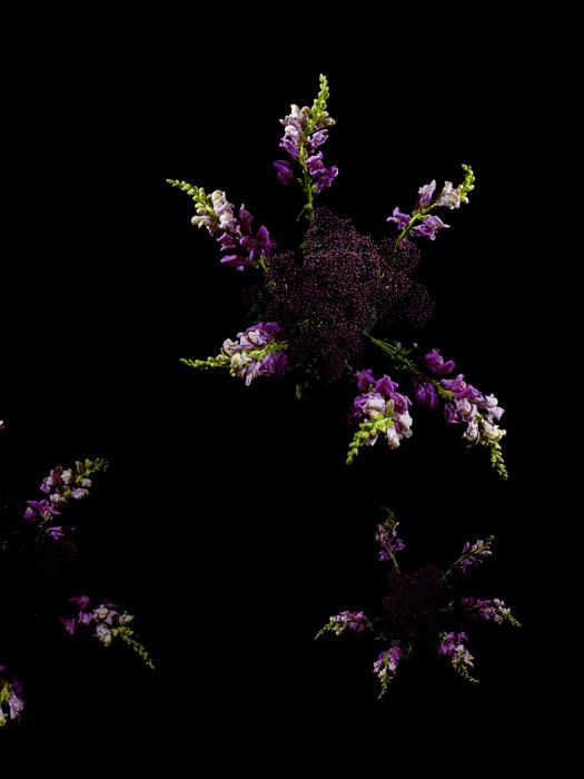 flowerworks 7 image