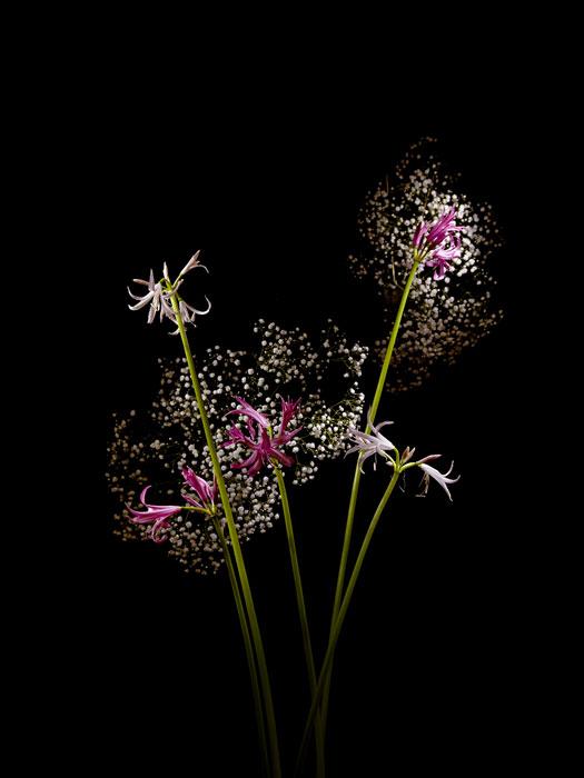 flowerworks 9 image