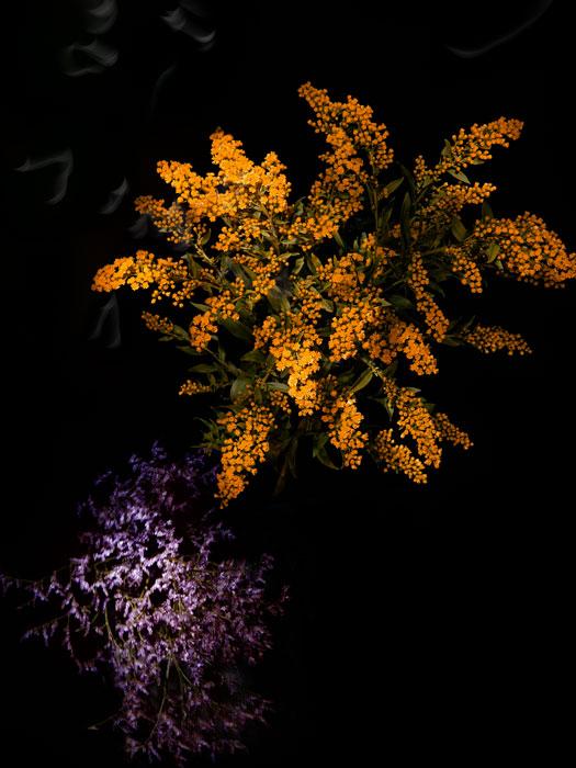 flowerworks 11 image