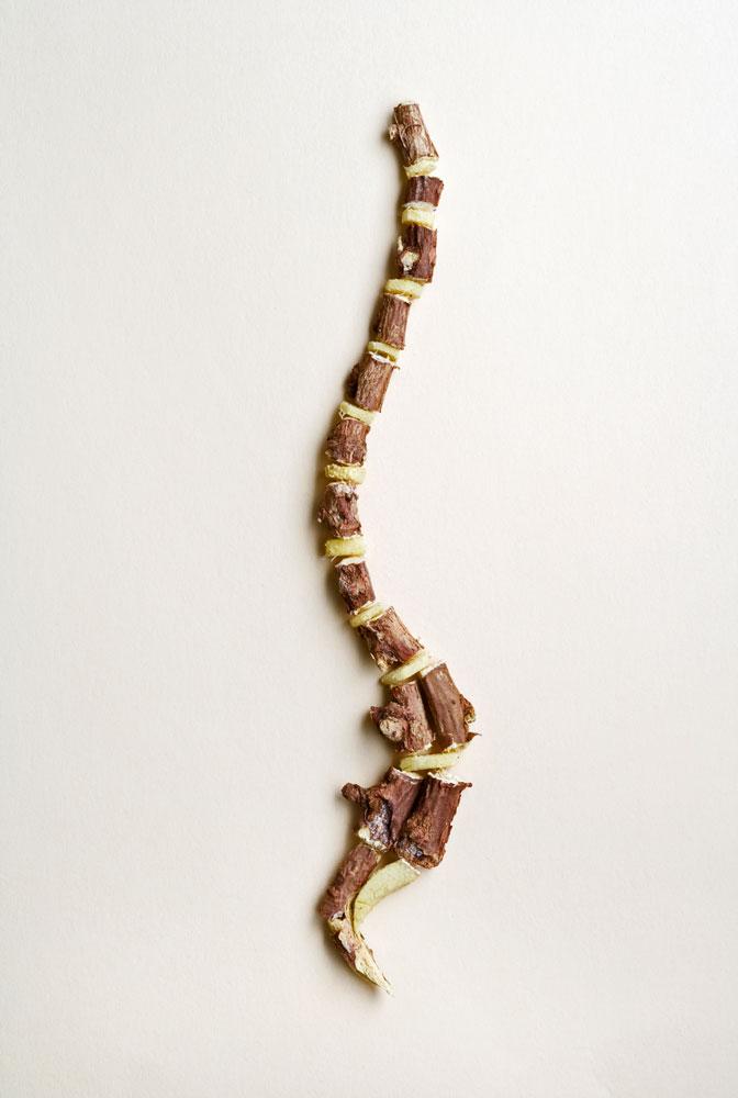 spinal column image