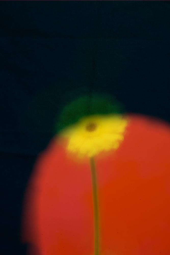 Disco flowers image #2