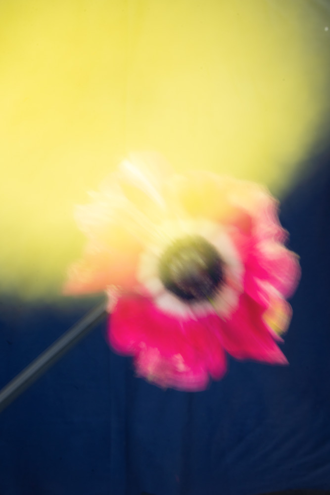 Disco flowers image #0
